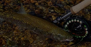 Trout Fly Fishing Lodge