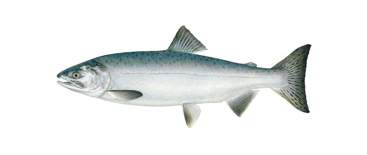 Best fly fishing in alsaka